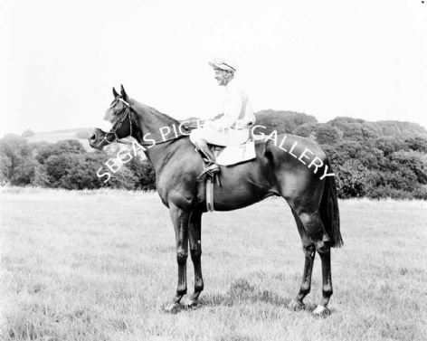 Racehorse Scottish Rifle with Jockey Ron Hutchinson